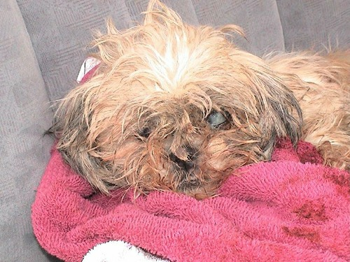 puppy mills the scourge of the dog world
